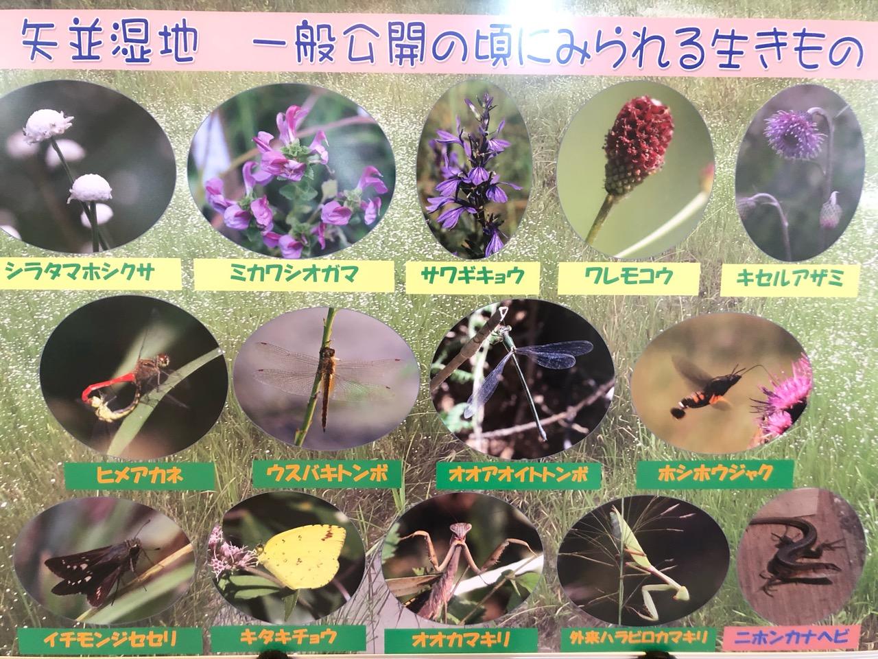 矢並湿地で見られる動植物