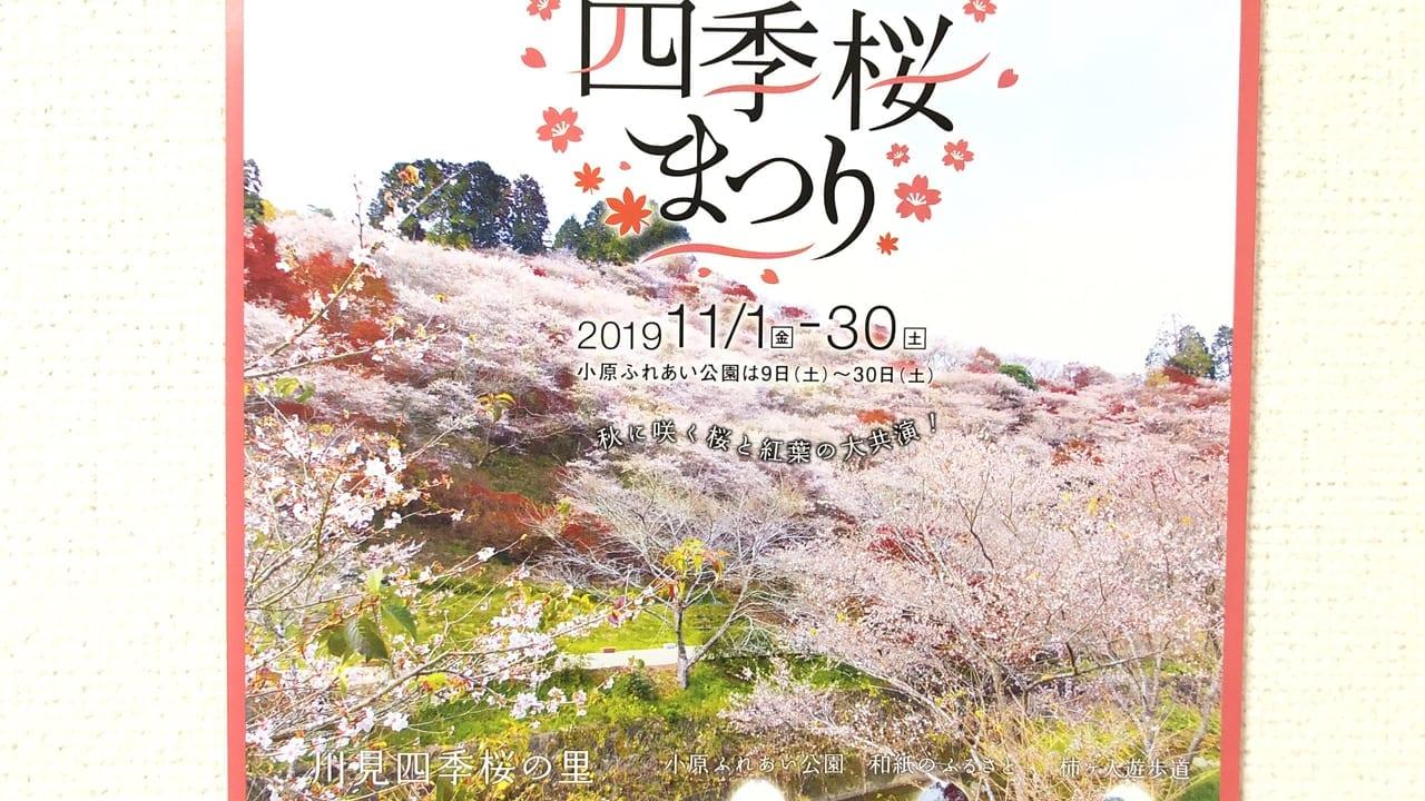 2019年11月1日から開催されている小原四季桜まつり